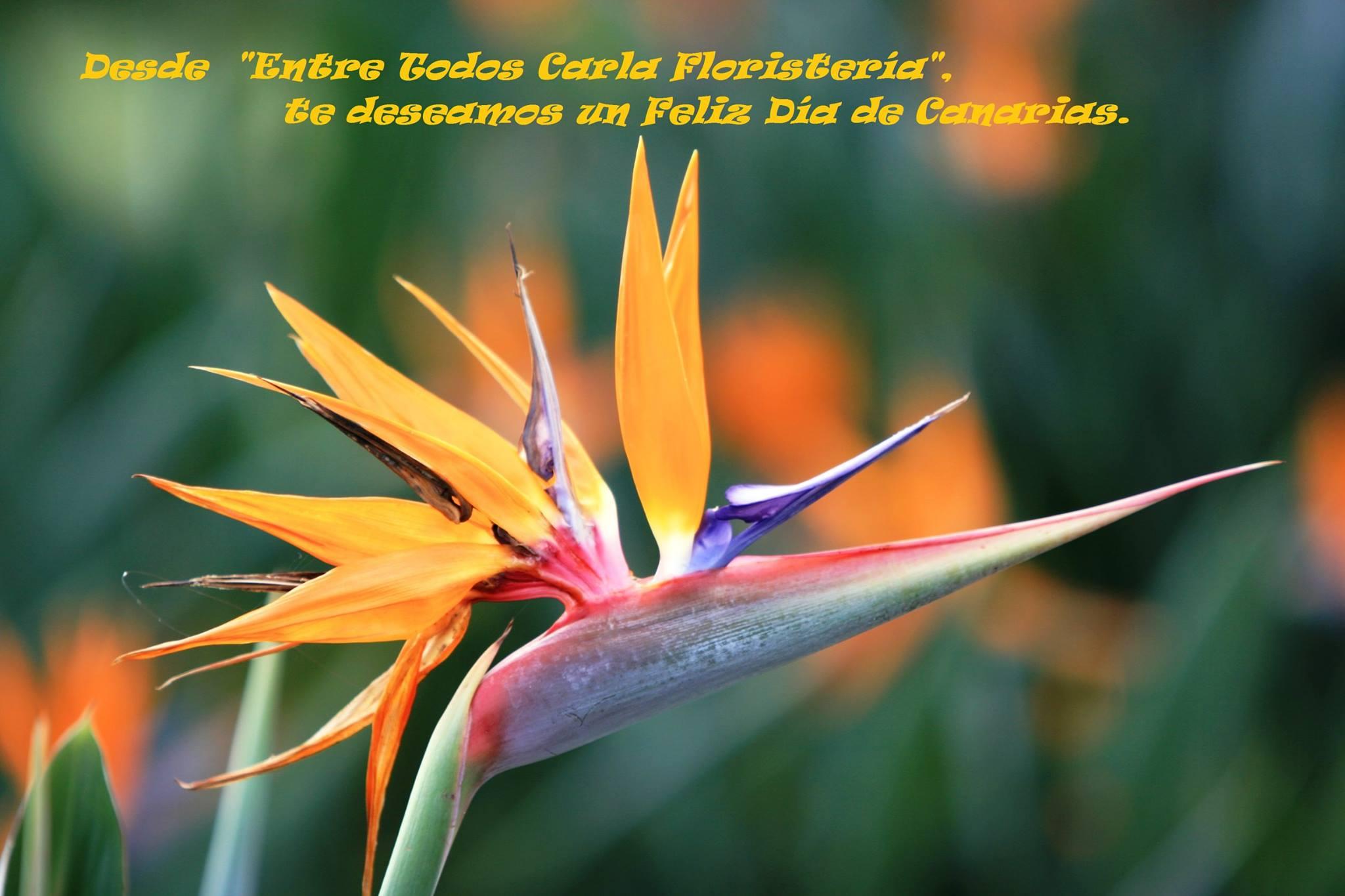 carla floristeria